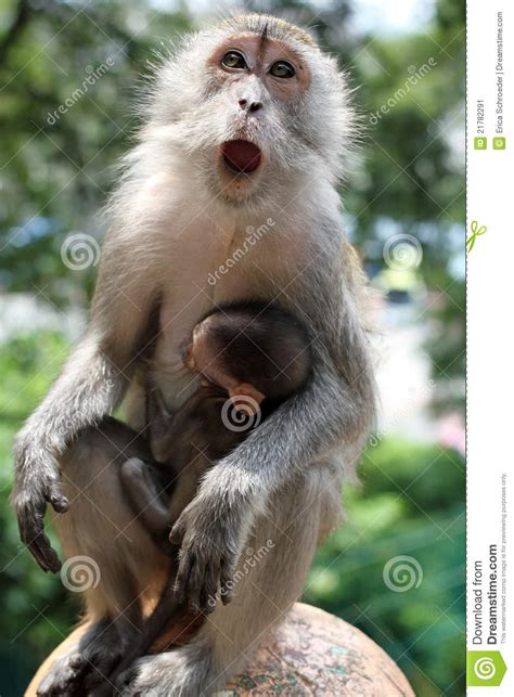 Mother Monkey With Baby Monkey In Arms Stock Image - Image